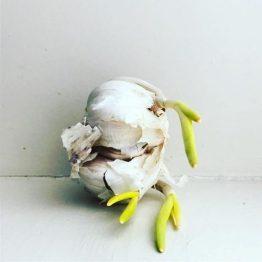Shooting. Garlic shots. Garlicking salt. Lemons.