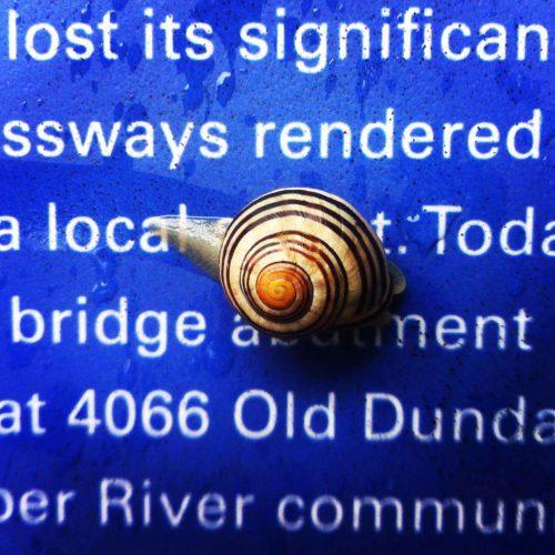 snail-reading